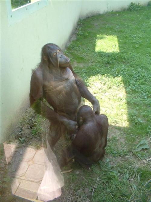 Great Monkey Lovin!