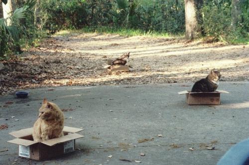 3catsin3boxes.jpg