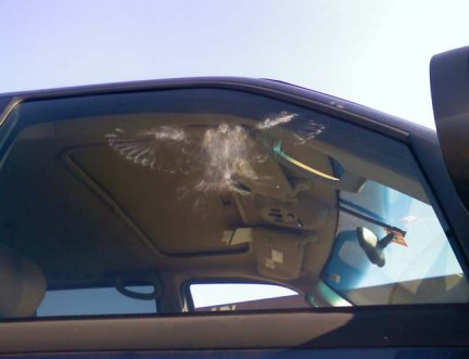 bird_hits_window1
