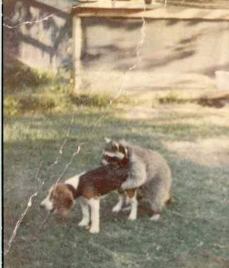 worlds_worst_hunting_dog2