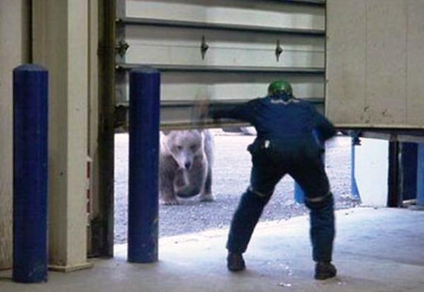 bear-under-the-door