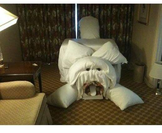 hotel maid scare 4