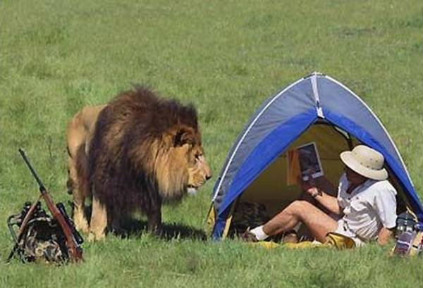 lion-wakes-up-hunter-in-tent