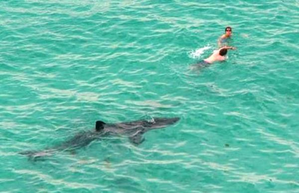 shark-in-the-water