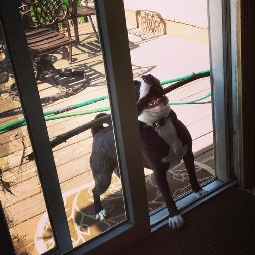 funny_dog_015