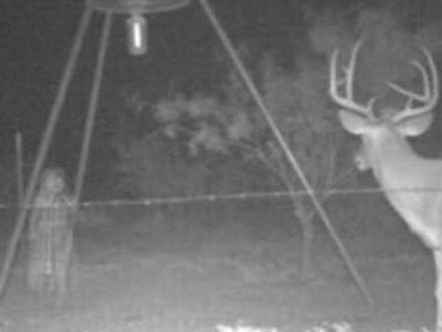 little-girl-with-deer